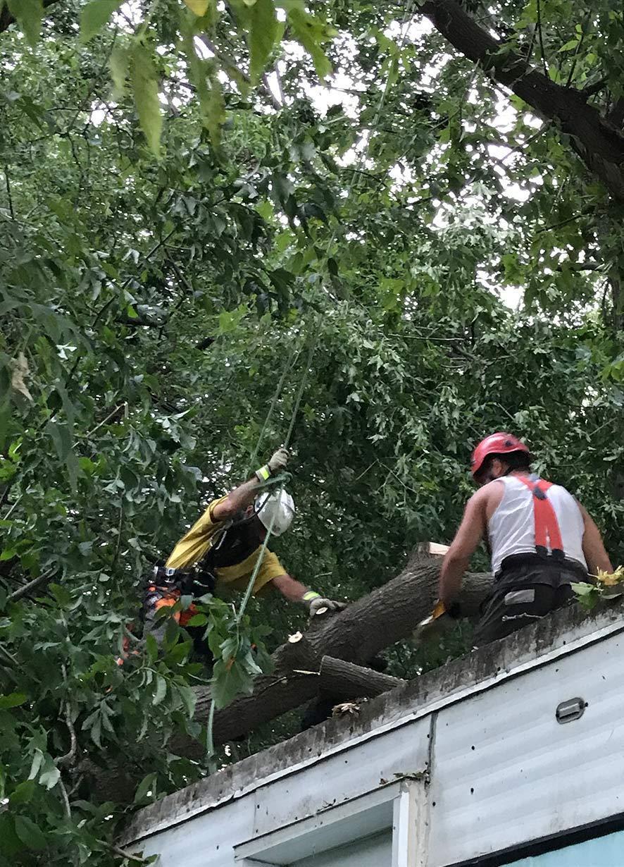 employés sur toit