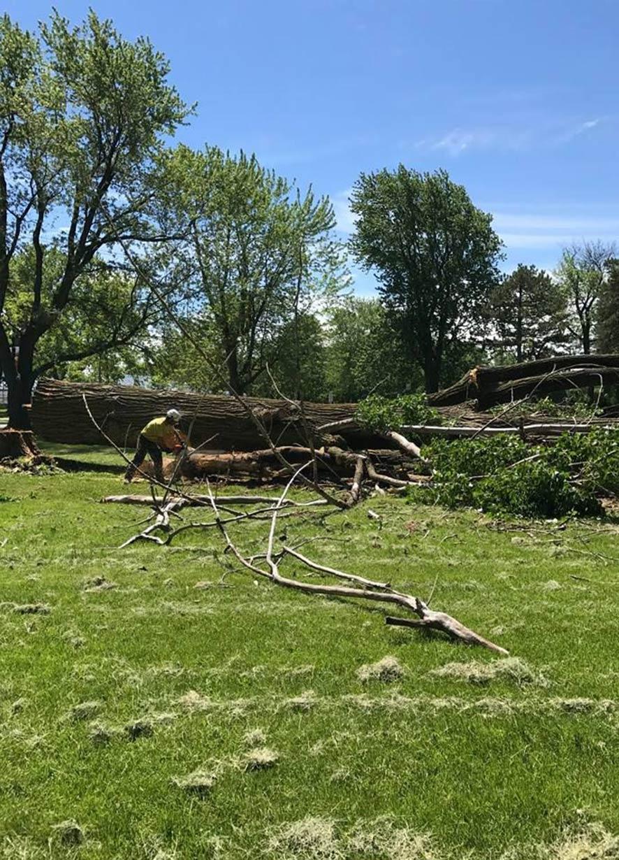 arbre abattu